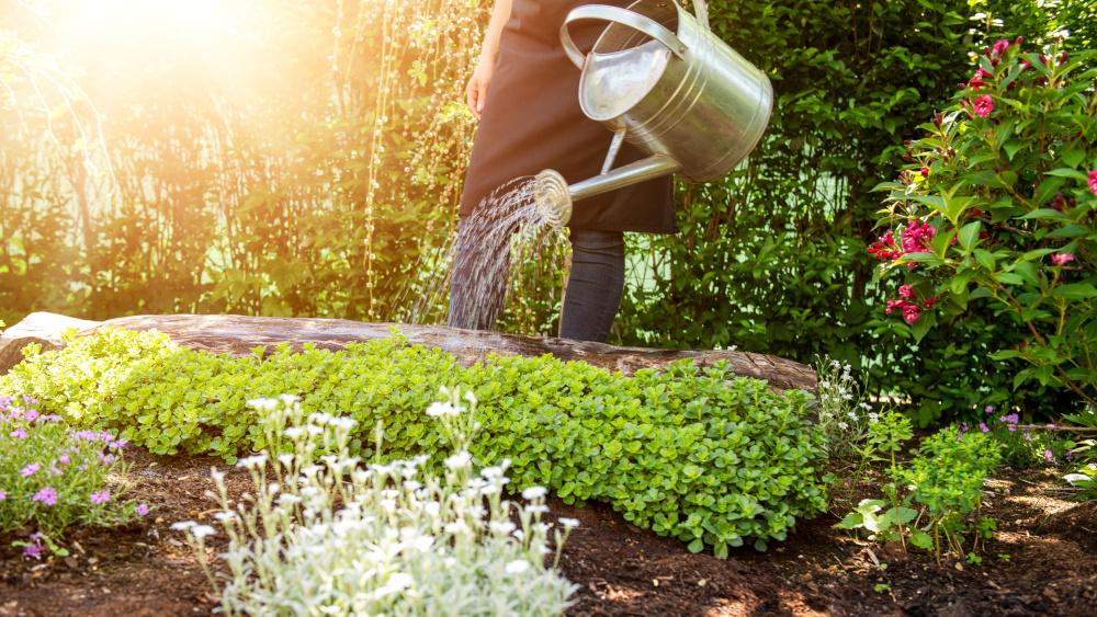 podlewanie roslin w ogrodzie