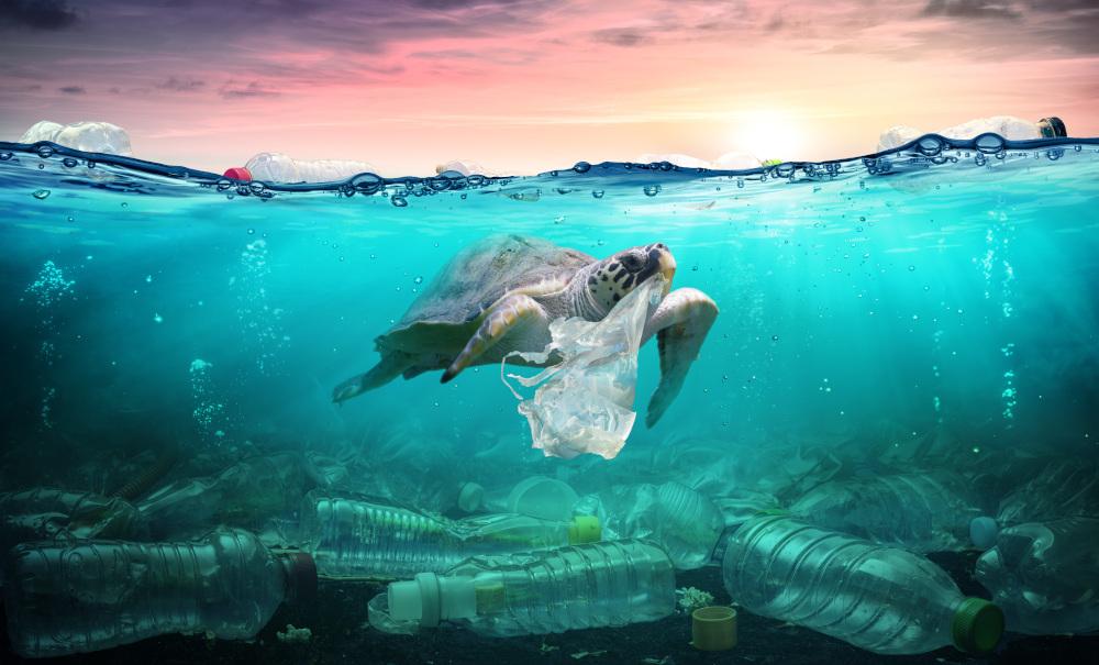 żółw pływajacy we wodzie w której znajduje się pełno plastiku